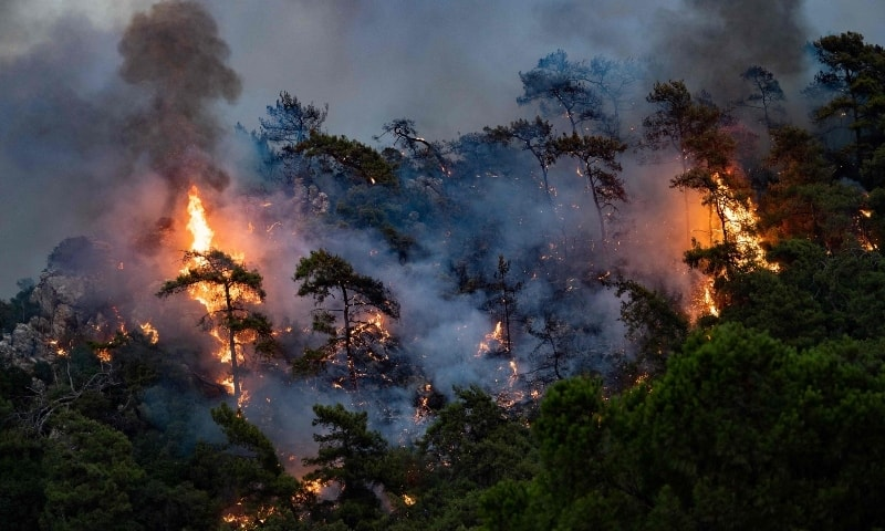 A wildfire burn trees on August 2 in Mugla, Marmaris district, as the European Union sent help to Turkey and volunteers joined firefighters in battling a week of violent blazes that have killed eight people. — AFP