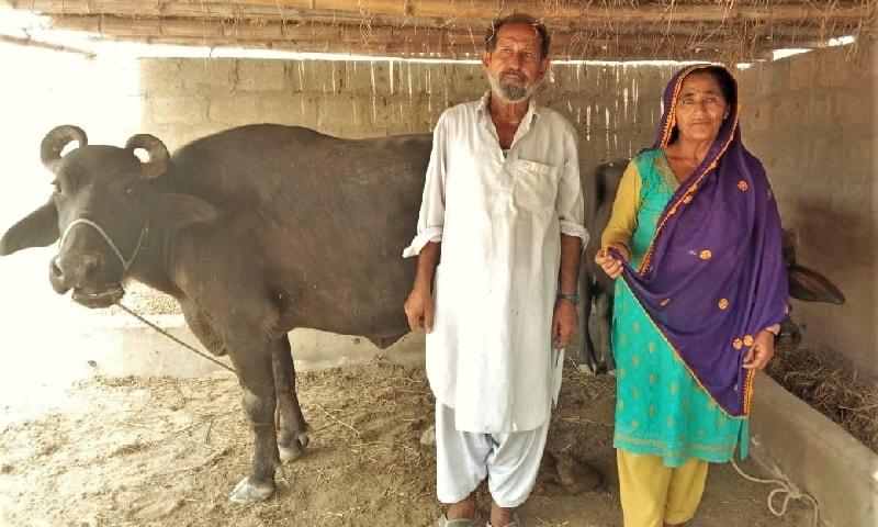 سعدیہ اور انکے شوہر گل حسن اپنی بھینس کے ہمراہ