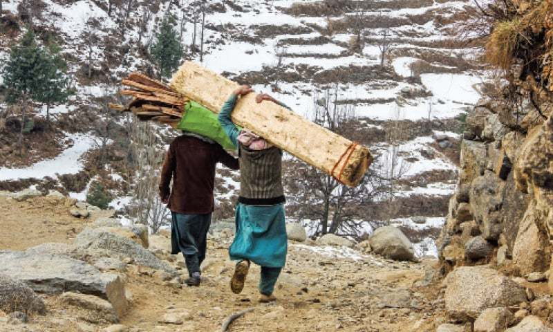 Locals carry wood illegally chopped down from Ghwarejo forest in Miandam, Swat. — Dawn/File
