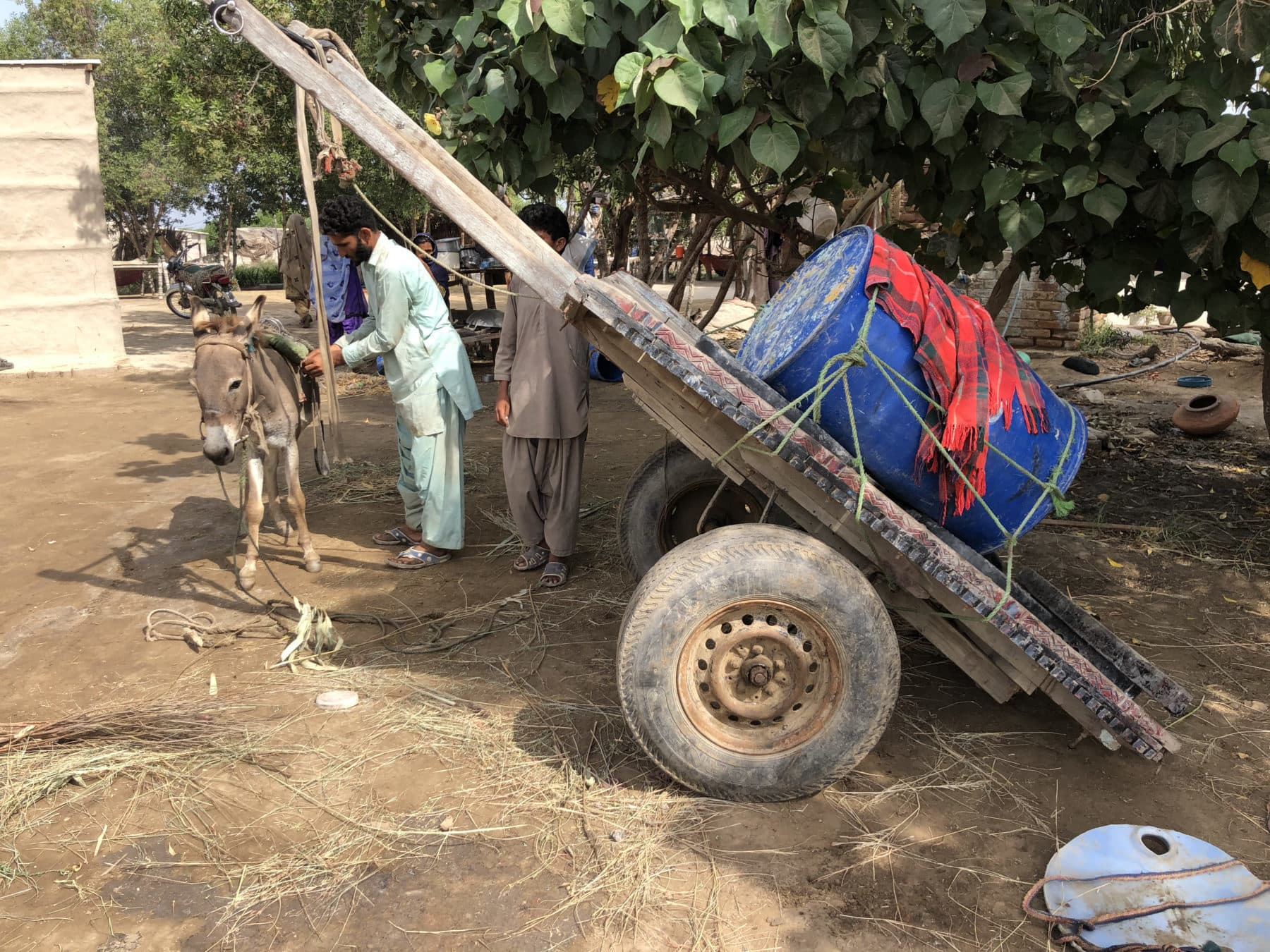 A donkey cart being prepared to fetch water for Barkat's family in Rato Khan Rind, in Thatta district of Sindh. — Photo by Zofeen Ebrahim