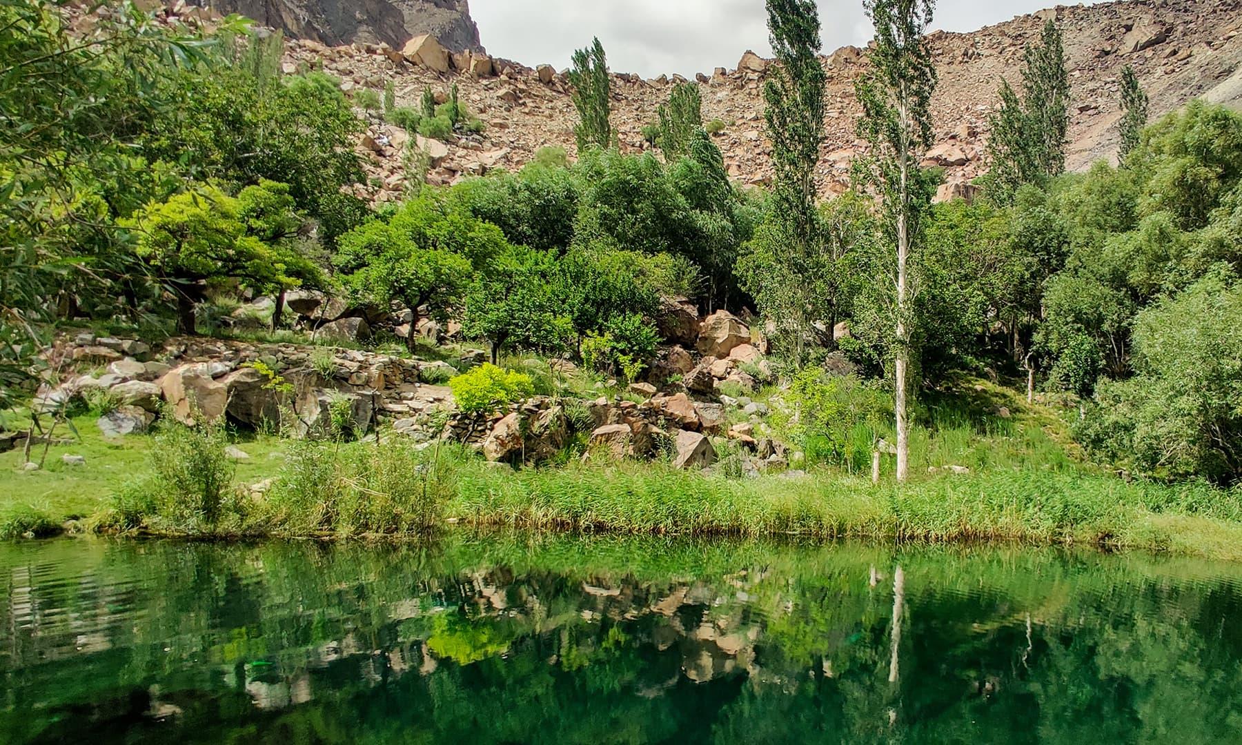 جھیل کے کنارے خوبانی کے درخت بکثرت پائے جاتے ہیں