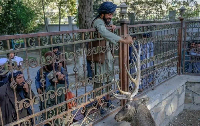 Scores of armed Taliban fighters — and many more without weapons — walked into the zoo after Friday prayers on Sep 17. — AFP