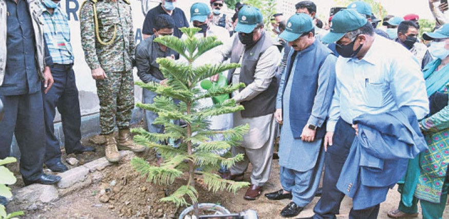 Sindh Governor Imran Ismail plants a sapling on Sunday.—APP