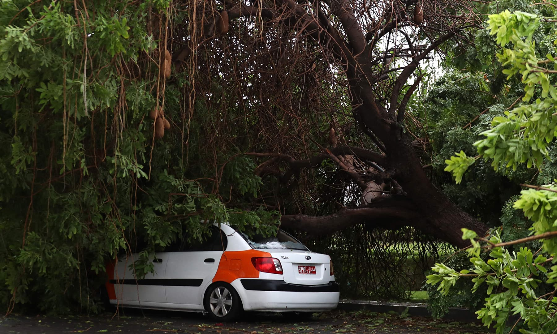 A vehicle is seen crushed by a tree amid Cyclone Shaheen in Oman's capital Muscat on October 3. — AFP