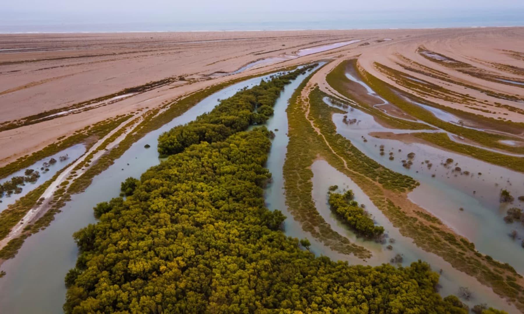 تمر کے جنگلات متعدد جانداروں کی آماجگاہ کی حیثیت رکھتے ہیں—تصویر بشکریہ  الیاس اللہ بخش