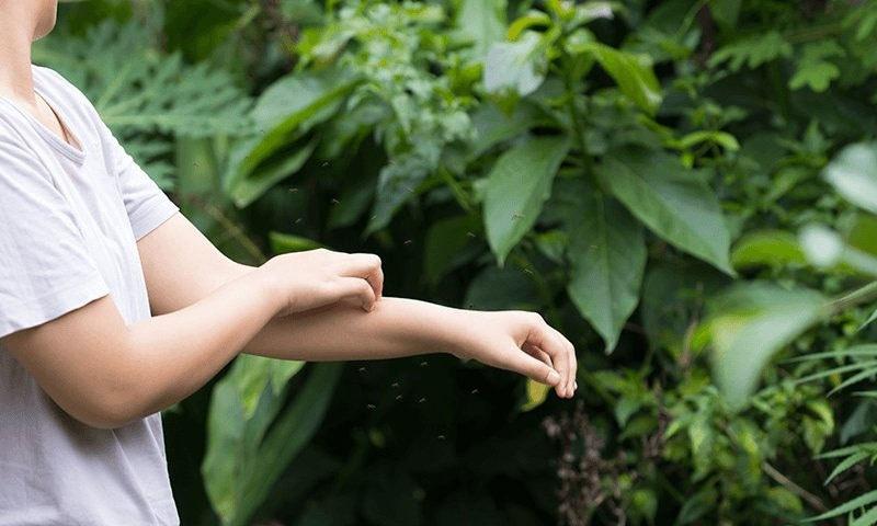 پاکستان میں حالیہ دنوں میں ڈینگی کیسز میں اضافہ ہوا ہے — شٹر اسٹاک فوٹو