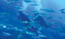 Aquarium: Underwater magic