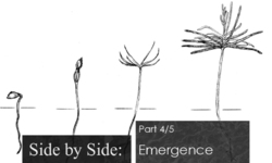 Side by Side - part 4/5: Emergence