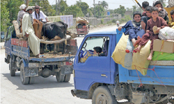 Displaced tribesmen selling cattle at throwaway prices