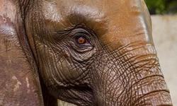 Karachi Zoo — where animals come to die