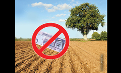 Why Gulf money did not flow into agriculture?