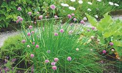 Nurture the sapling