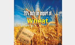 Need to review rationale for wheat pricing