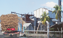 Profiting from delay in cane crushing