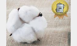 Restoring cotton standardisation fee