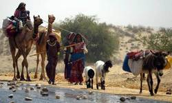 Tharis' unawareness of changing rainfall patterns is worsening food crisis: experts