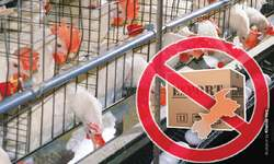 Threat to poultry industry