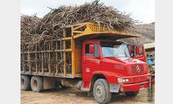 Cane economy trapped in a low price cycle