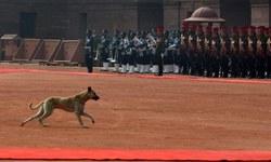 اوباما کا دورہ ہندوستان: 'ایوان صدر میں کتا'