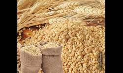 Fears of wheat stocks piling up with bleak export outlook