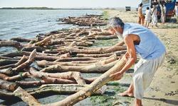 Mangrove wood seized near Ibrahim Hyderi