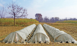 Growers start tobacco plantation in Swabi