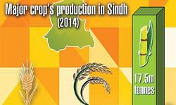 Output of key crops rising in Sindh