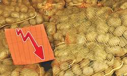 Potato prices crash