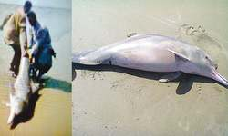 Two fishermen rescue stranded dolphin