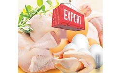 Export potential of poultry products