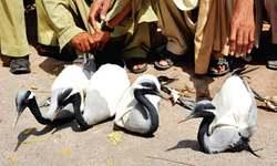 15 poachers held with 59 herons