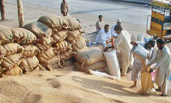 Wheat exports fetch good prices