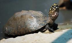 Hong Kong officials ask Pakistan to receive 751 smuggled turtles