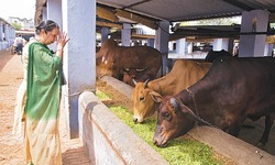 India's diehard Hindus push to ban beef in blow to poor