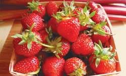 Strawberry hound