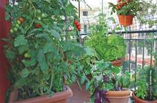 Focus on urban agriculture