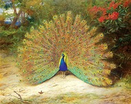 COLUMN: Ghalib, the peacock and us