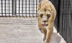 Three zoo animals die from heatwave