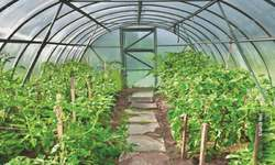 Promoting tunnel farming