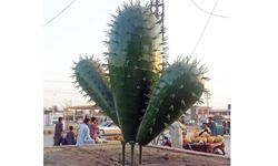 From a city of gardens to cactus land