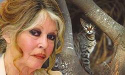 Brigitte Bardot slams Australia's plan to kill 2m feral cats