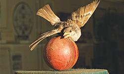 Cricket immortalised