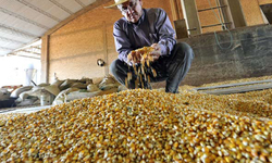 'Senate's passing of seed law to flood market with harmful GM food'