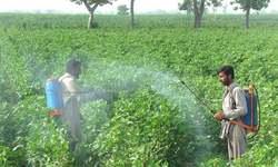 Rains beneficial for major crops