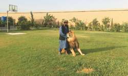 Footprints: Parenting a lion