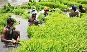 Iran asked to lift rice, kinno import ban