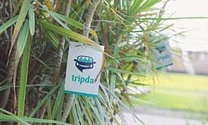 Can carpooling apps like Tripda and Savaree succeed in Pakistan?
