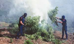 Crackdown on cannabis growers, traffickers in Albania