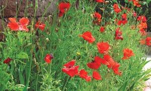 GARDENING: Sowing September