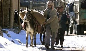 Ban placed on export of donkey hides